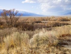 Stock image of a landscape scene dessert grasses and mountains in the background. The photograph was shot using the Hasselblad medium format camera.