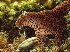 Leopard painting - Original Oil paintings, Wildlife and animal art by © Crista Forest Wildlife Paintings, Wildlife Art, Oil Paintings, African Leopard, Wall Art Prints, Canvas Prints, Framed Prints, Forest Art, Artwork Images