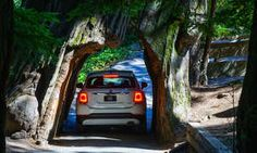Drive through the trees (literally) on this San Francisco escape to the redwoods - Posted on Roadtrippers.com!