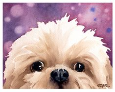 Everything About Playfull Shih Tzu Puppy Temperament Watercolor Artist, Watercolor Animals, Watercolor Painting, Shih Tzu Puppy, Shih Tzus, Lion Dog, Collie Puppies, Lhasa Apso, Dog Art