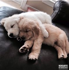 Cuddle buddy // puppies