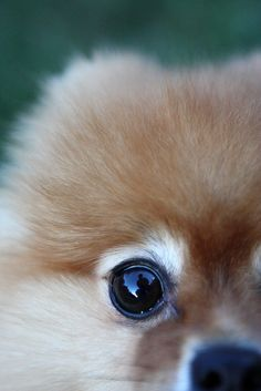 REFLECTION IN HIS EYE 38/52   Flickr - Photo Sharing!