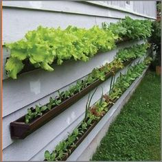 gutter gardening. This would be cool on a fence or something!
