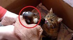 Teneri cuccioli Notizie: Guardate la reazione di mamma gatto quando gli por...