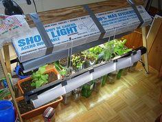 Indoor veggie garden. It can be done!!!
