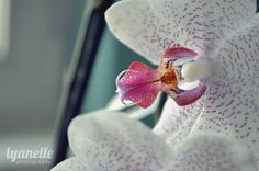 orchid ♥