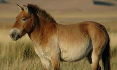 Horse Found in Yukon Permafrost Yields Oldest DNA Ever Decoded The frozen remains of a horse more than half a million years old have reluctantly given up their genetic secrets, providing scientists with the oldest DNA ever sequenced. The horse. Southwestern Paintings, Wyoming Mountains, Extinct Animals, Science, Horse Breeds, Wild Horses, Zebras, Beautiful Horses, Prehistoric