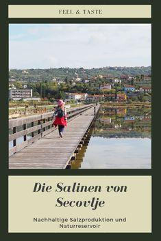 Unweit von Piran sind die Salinen von Secovlje - wo Salz noch nach Methoden aus dem Mittelalter produziert wird (ohne Maschinenkrach) können hunderte Seevögelarten Leben und Brüten.