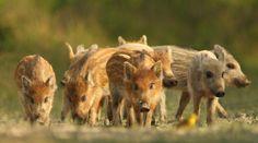 Index - Kultúr - Márpedig cuki állataink nekünk is vannak