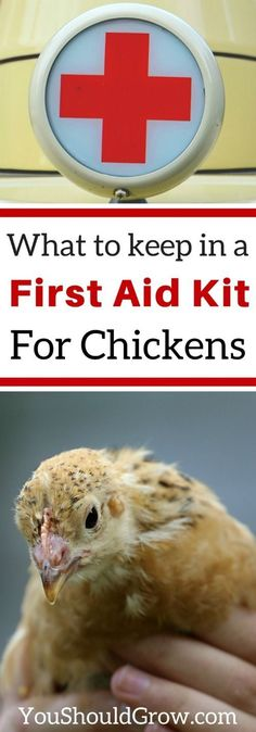 Veterinarian recommended items to keep in your first aid kit for backyard chickens. Plus get a free printable checklist. via @whippoorwillgar