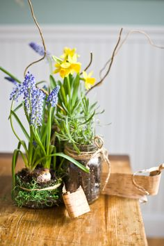 bulbs in jam jars ? we could do these with white flowers only and moss bulbs in jam jars ? we could do these with white flowers only and moss Spring Flower Arrangements, Wedding Arrangements, Floral Arrangements, Table Arrangements, Love Flowers, Spring Flowers, White Flowers, Spring Bouquet, Organic Horticulture