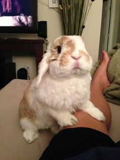 I see you sitting here without carrots.  We should fix that now.