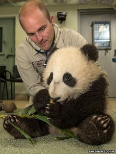Six-month-old giant panda cub Xiao Liwu gets a routine check-up at San Diego Zoo in California.