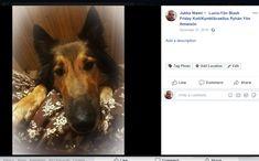Screenshot: (30) Jukka Niemi Blessings, Islam, Blessed, Thanksgiving, Facebook, Thanksgiving Tree, Thanksgiving Crafts