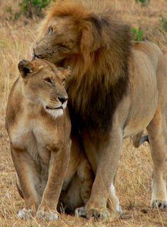 Amboseli National Park, Kenya | PLAN YOUR VACATION IN KENYA