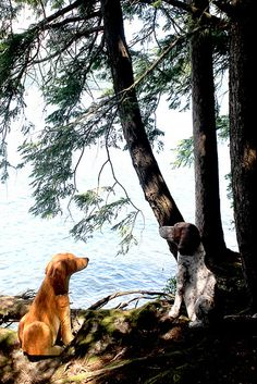 Fanny, I dare you to jump in....(I'm not going to tell her how cold the lake is today!)Basin Harbor Club Dogs 016, via Flickr.
