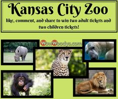 It's WowWednesday! In two weeks (May 1, 2019), we will be giving away two adult tickets and two children's tickets to the Kansas City Zoo! ❤ To be entered into this giveaway, all you have to do is LIKE, COMMENT, and SHARE this post on our Facebook Page! It's that easy. 🙌 Please remember, to be eligible to win your post must be set to public so we can see it.  Tag a friend because sharing is caring. 💕