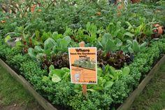 Gemüse und mehr auf kleinstem Raum RHS Chelsea Flower Show 2014