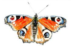 Watercolours, Watercolor Paintings, Original Paintings, Butterfly Painting, Butterfly Watercolor, Printable Butterfly, Digital Prints, Digital Art, Hidden Images