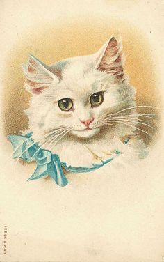 Vintage Cat Card - Adorable White Cat