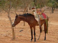 Tradition saddle.jpg (600×450)