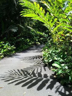 Jardin botanique de Big Island àHawaii