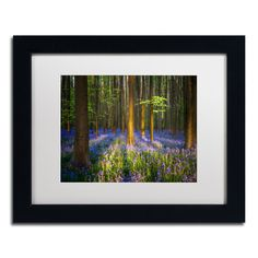 'Mystical Forest' by Mathieu Rivrin Framed Photographic Print