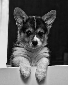 hey there sweet pup!
