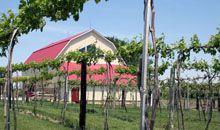 Welcome to Danish Countryside Vines & Wines (Elk Horn, Ia)