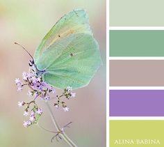 #alinababinacolors #alinababina