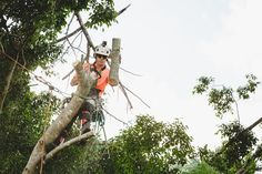 Main Points to Consider While Looking for Tree Removal Service #treeremoval #treecutting