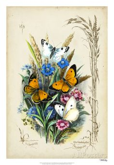 Victorian Butterfly Garden I Giclee Print by Vision Studio at AllPosters.com