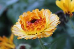Tamanna S: #flower #beauty #nature #amazing