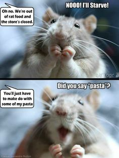 ♥ Small Pets ♥  Hahaha, our rats favorite foods are spiral pasta & sugar snap peas (we have to open the pod for him)