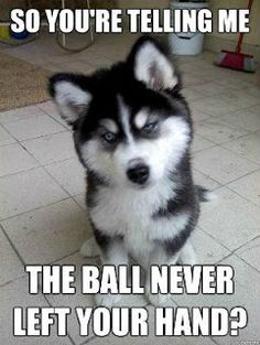 Ten funny animal pictures that you probably can relate to! - Funny Animal Quotes - - Ten funny animal pictures that you probably can relate to! Humor Animal, Funny Animal Quotes, Cute Funny Animals, Funny Cute, Funny Dogs, Funny Husky, Husky Meme, Dog Quotes, Funny Memes