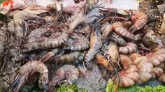 Tiger Prawn Buy and spicy Cook