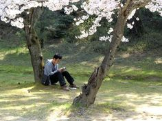 People and cherry blossoms