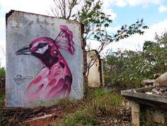 Graffiti, Street art, Bird, Peacock, Bonet
