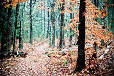 Especially love Autumn walks!