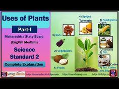 E Learning, Smart School, Grain Foods, Science For Kids, Turmeric, Coconut Oil, Spices, Vegetables, Fruit