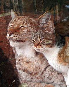 Mit hundeliv med Vaks.: Katte fredag / Feline Friday. Read more at http://laikashundeliv.blogspot.com