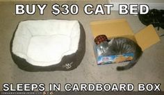cats in boxes memes - Google Search