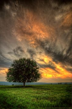 ~~Seclusion | lone tree at sunset | by Tom Lussier Photography~~