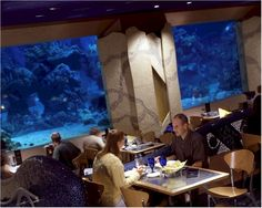 Disney Dining Review: Epcot's Coral Reef: Coral Reef Restaurant in Epcot at Disney World