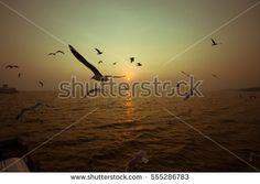 Vintage Bird fly sunrise shilhouette