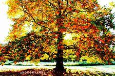 Tree Anouchkanna's shots Also on Instagram
