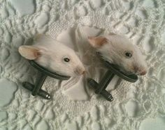 Taxidermy Mouse Head Cuff Links by PreciousCreature on Etsy