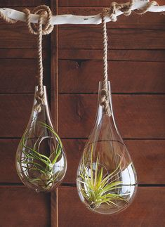Hanging air plant atrium -Simple, clean and modern.