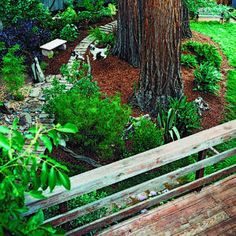 How to landscape a dog friendly yard. Good ideas. But, I knew a family that had a dog that chew through their tree trunks, chewed up all their shrubs, and dug up all their sprinkles. He even upturned pavers and moved them around!