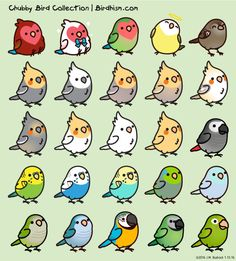 cute kawaii birds sparrow parrotlet lovebird macaw conure cockatiels Quaker parrot african grey chibi birds birb birblr cody the lovebird birdhism Moustached parakeet